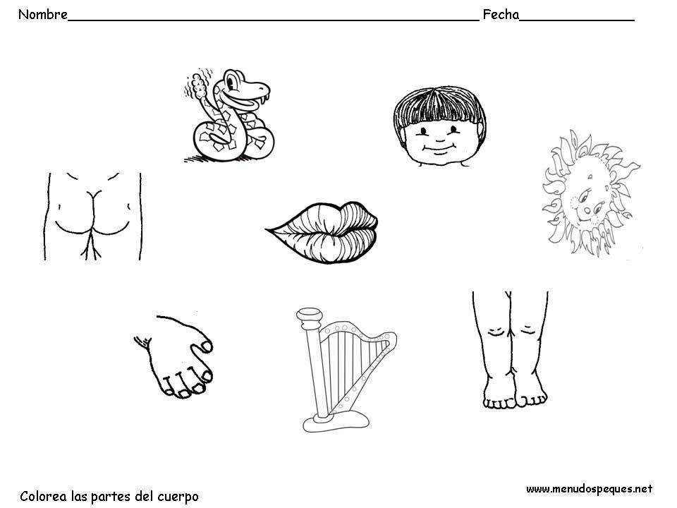 Material educativo para maestros: Actividades cuerpo humano para ...