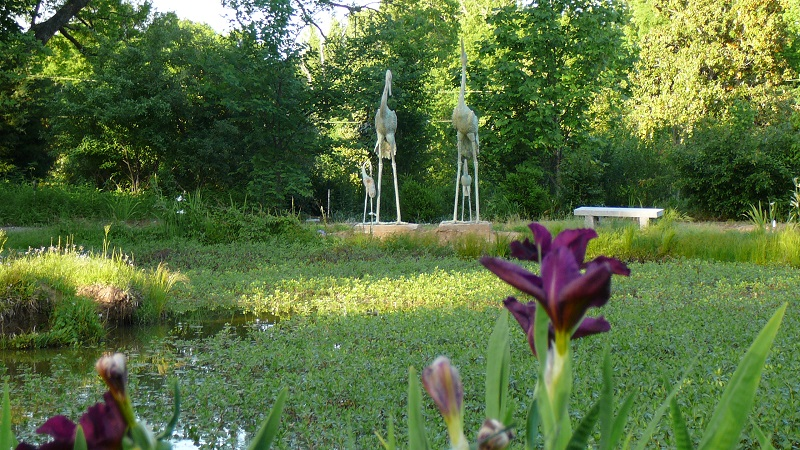 World of Irises: 2016 Society for Louisiana Irises Convention in ...