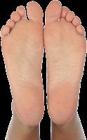 Arch (Telapak kaki)