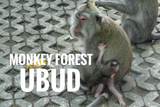Monkey Forest: el templo de los monos en Ubud, Bali
