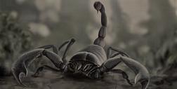Pulmonoscorpius hewan hidup di jaman pra sejarah