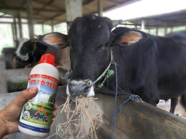 Mosa Vitto Untuk Ternak Sapi Lembu