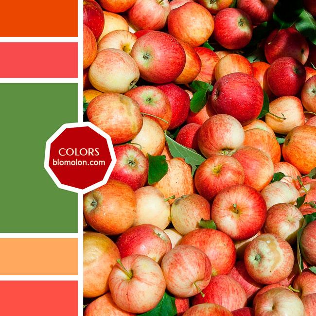 variedad_en_color_moodboard_89