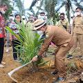 Wabup Sanggau Melakukan Tanam Perdana Tanaman Kelapa Sawit Program PSR Di Desa Harapan Makmur