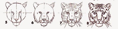 http://tips-trick-idea-forbeginnerspainters.blogspot.com/2015/01/how-to-draw-tiger-head-in-eight-easy.html