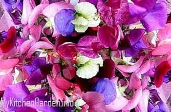 Peas Flowers