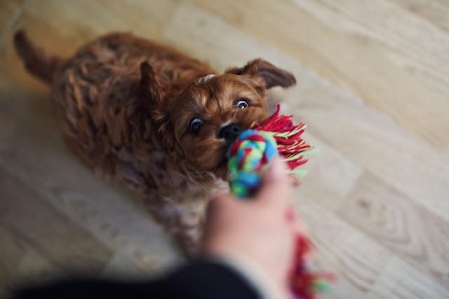 Érti a kutya, hogy mit akar tőle a gazdi? Magyar kutatók vizsgálták