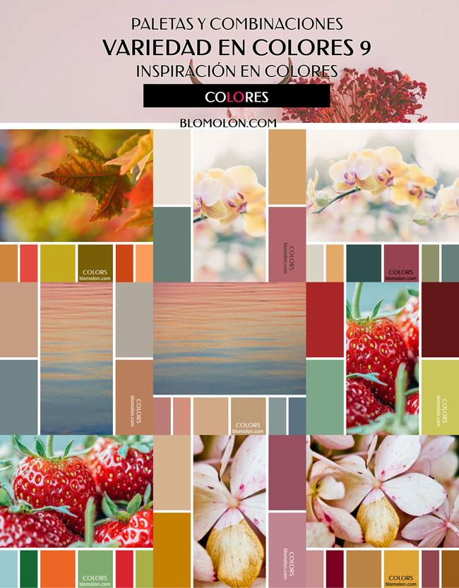 variedad_en_color_blomolon_4