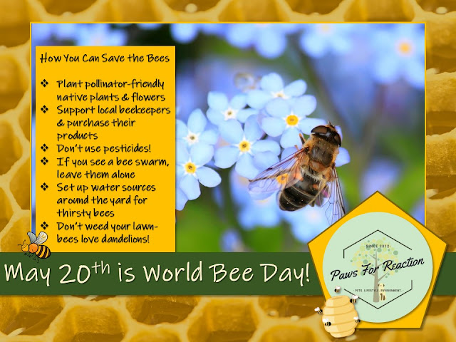 World Bee Day save the bees Paws For Reaction