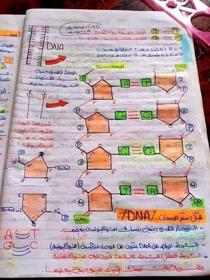 اقوي ملخص DNA تالته ثانوي 5