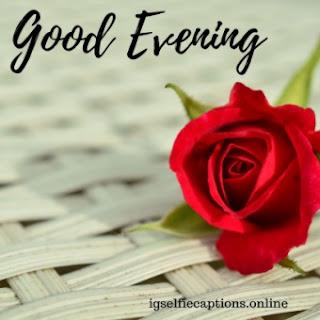 good evening flower image