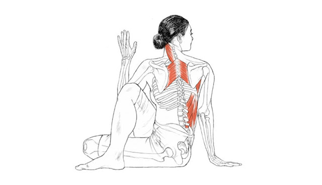 Ardha Matsyendrasana - Yoga Pose for Diabetes