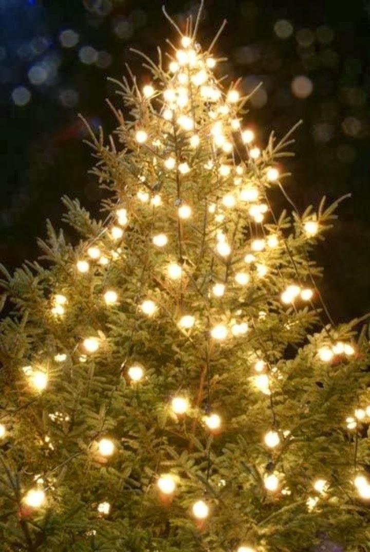 a christmas tree | a christmas tree miracle | a christmas ...