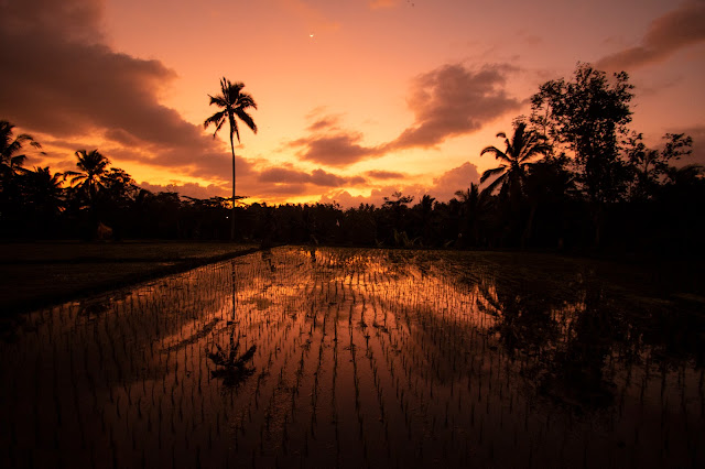Risaie di Tegalalang-Bali