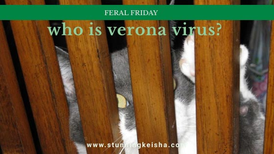 Feral Friday: Who is Verona Virus?