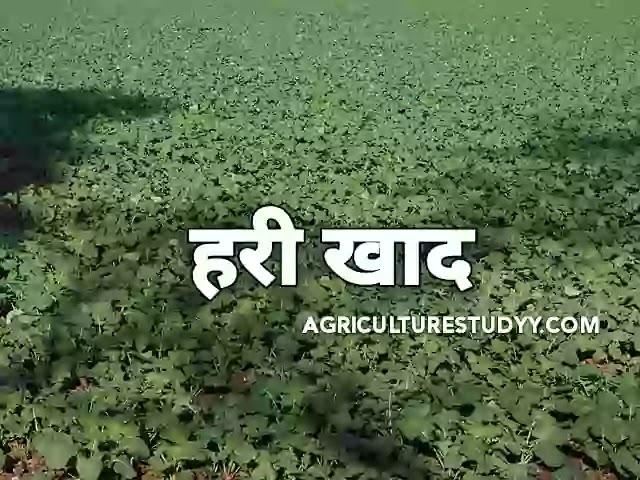 हरी खाद (Green Manure in hindi) किसे कहते है।