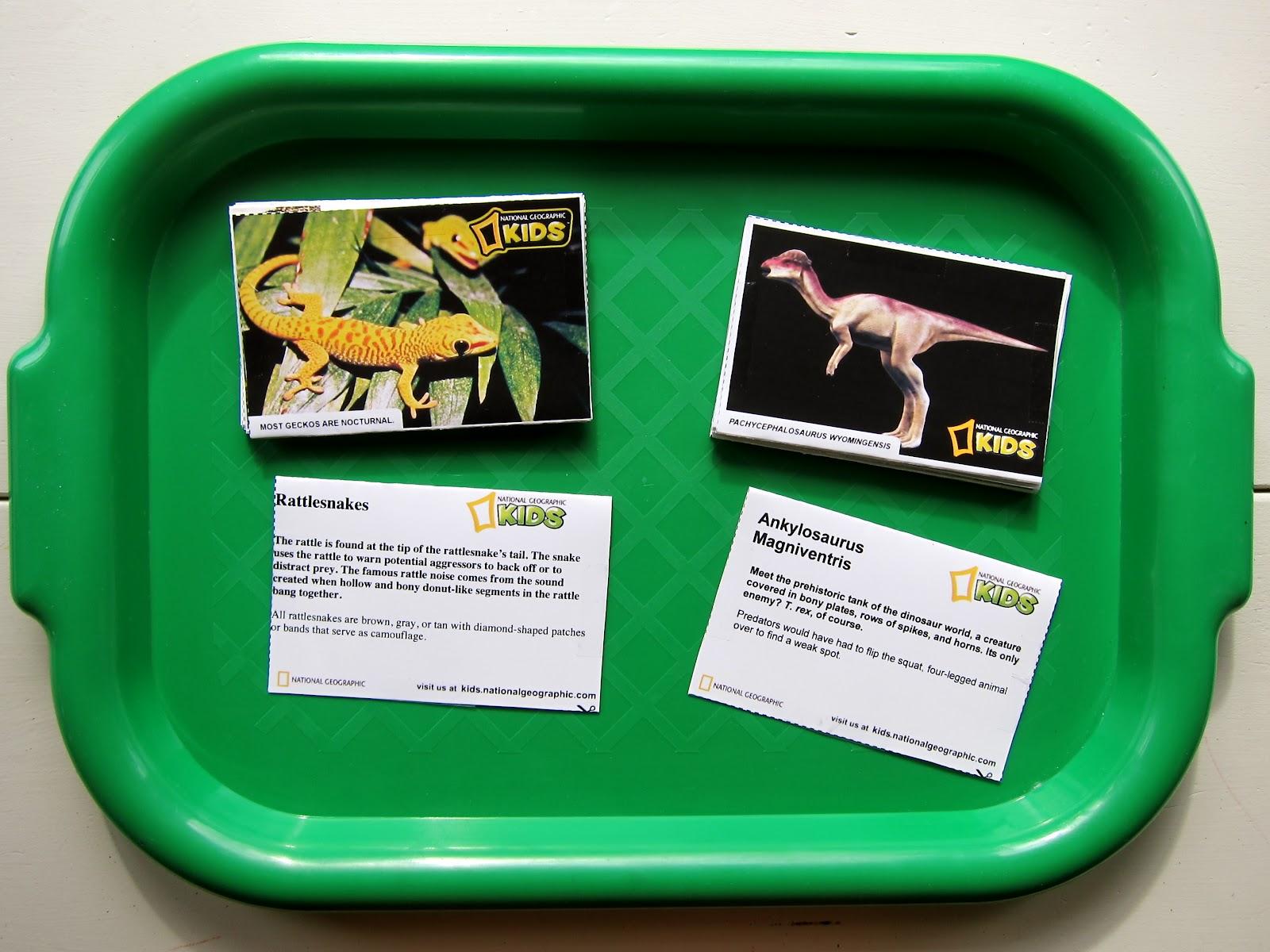 Preschool Syllabus Reptiles
