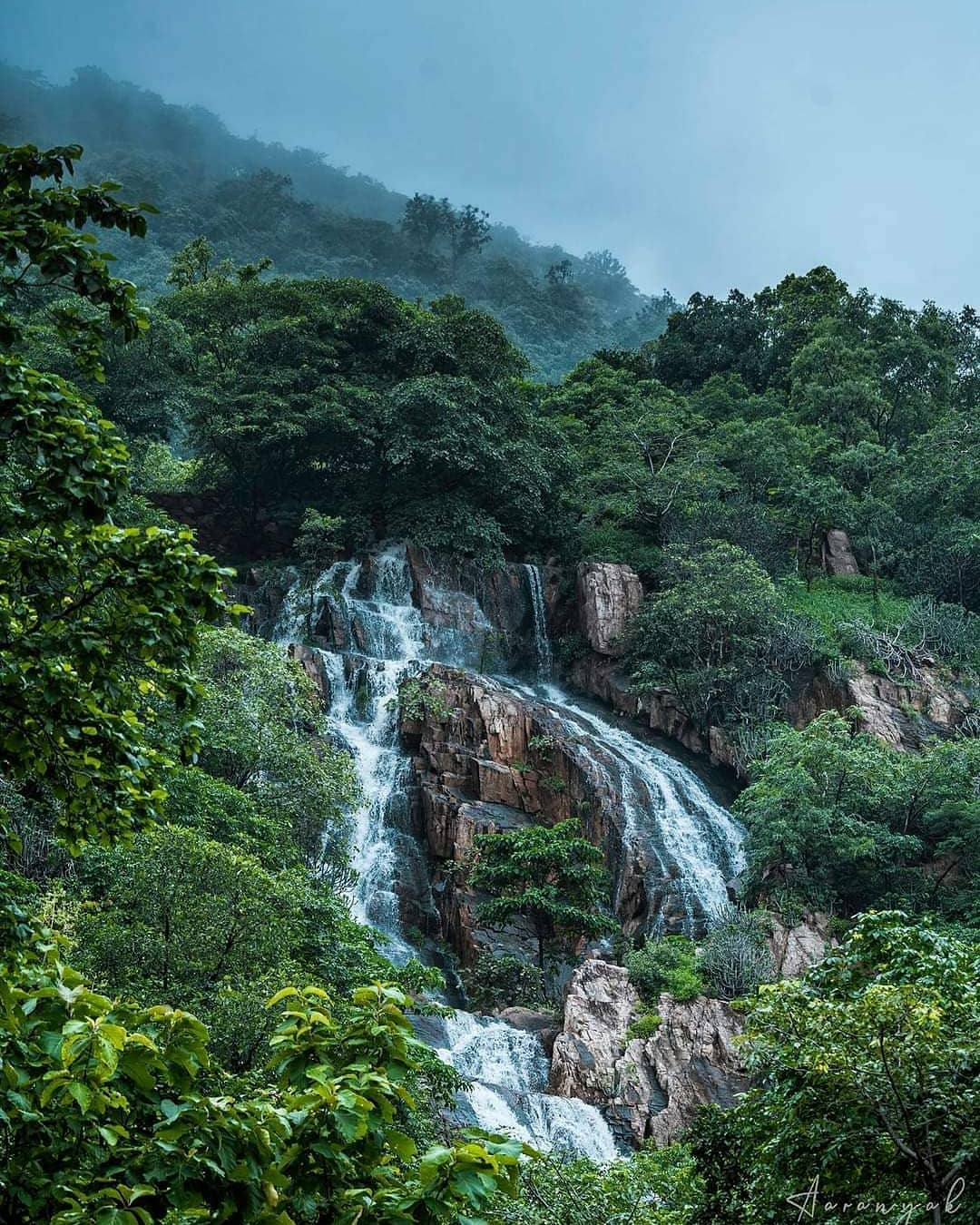 Polo Forest : The best place visit in Gujarat ~ The Lit Things