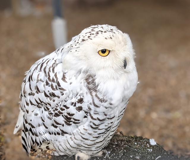 Kirkleatham Owl Centre Review
