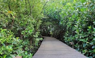 Wisata Hutan Mangrove BJBR Probolinggo