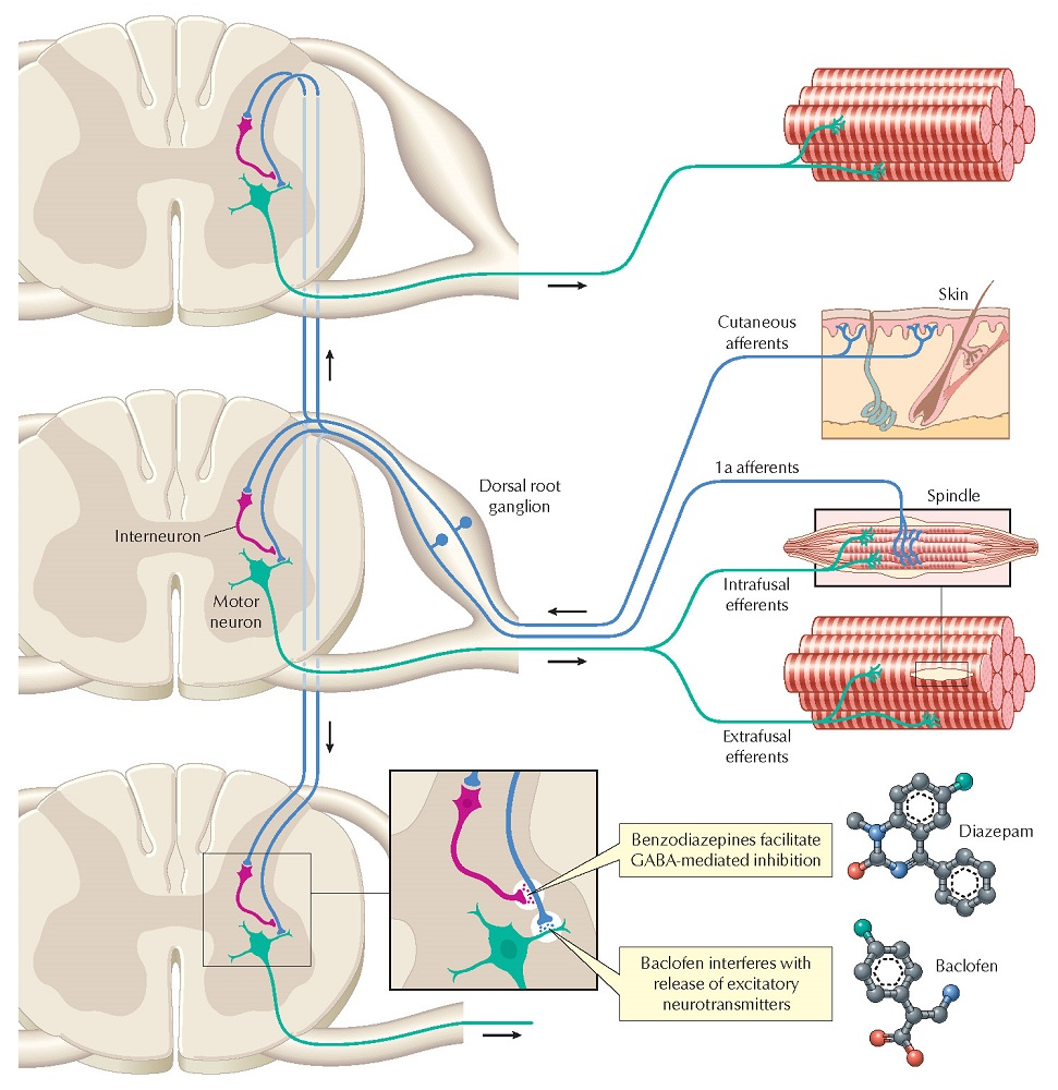 Motor Neurons and Drugs