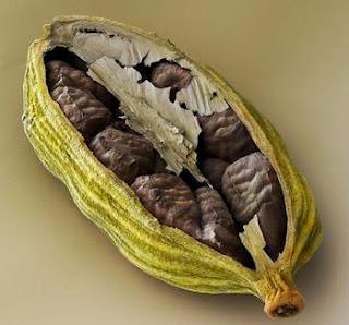 Elettaria Cardamonum