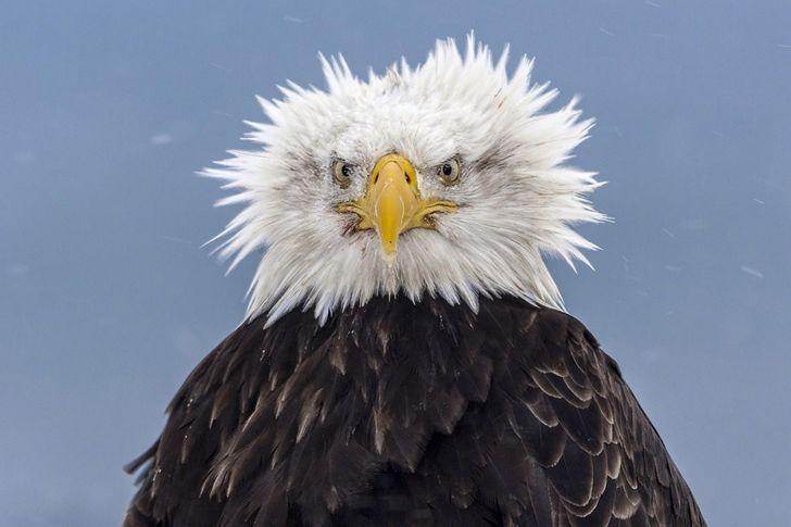 eagle focusing On target