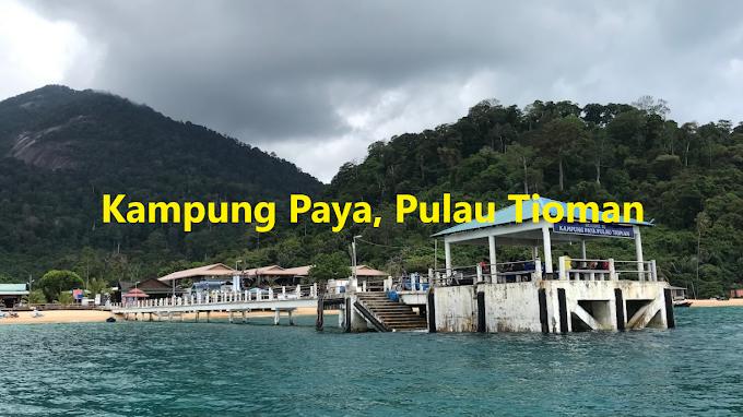 Paya Village (Kampung Paya), Pulau Tioman : Panduan Lengkap Termasuk Tarikan, Penginapan & Aktiviti