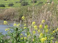 Israel Reizen: De Jordaan (rivier)
