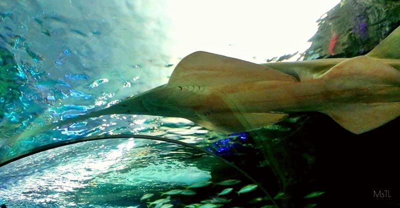 Exploring Ripley's Aquarium of Canada | Itsalamb.com