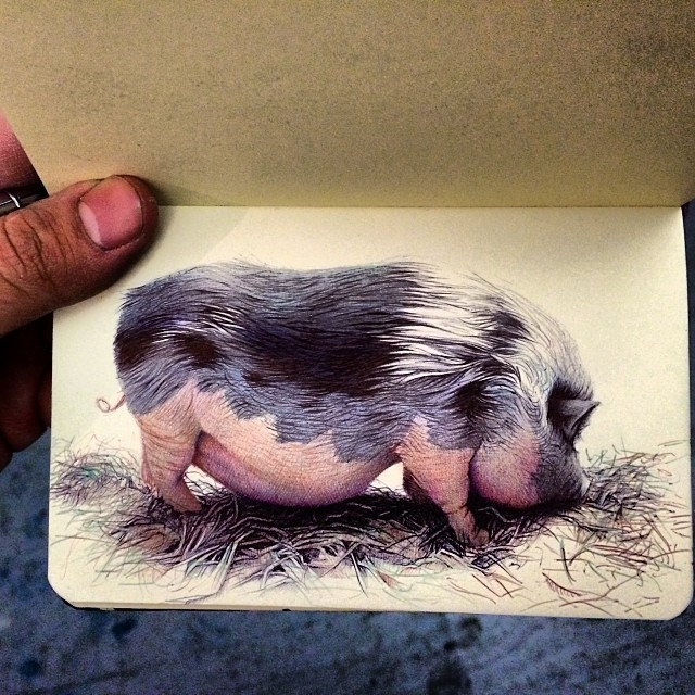 08-The-Pig-Nicolas-V-Sanchez-Inspired-Subjects-for-Colored-Ballpoint-Pen-Drawings-www-designstack-co