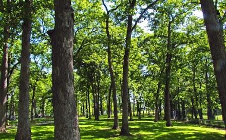 Μετρήθηκαν πάνω από 60.000 είδη δένδρων στη Γη