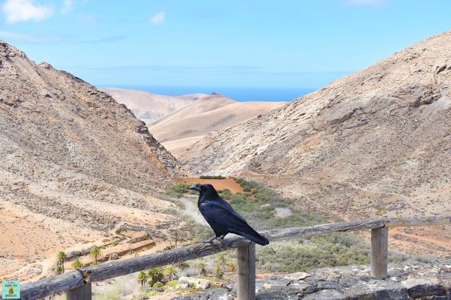 Mirador Las Peñitas, Fuerteventura