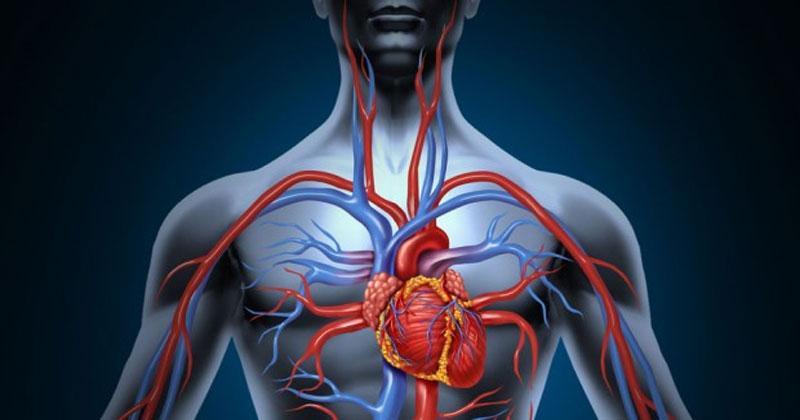 """Para quem quer preservar a saúde circulatória, não tem jeito: alguns hábitos saudáveis de vida precisam ser introduzidos. """"Embora a causa seja desconhecida, os fatores genéticos estão ligados ao aparecimento de varizes."""
