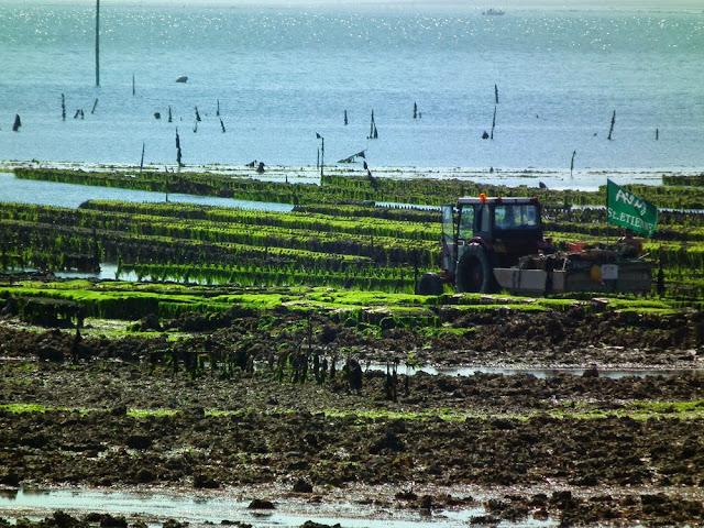 Oyster beds, Ile de Ré, France. Photo by Loire Valley Time Travel.