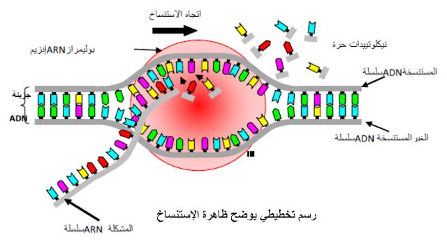 رسم تخطيطي يوضح ظاهرة الإستنساخ