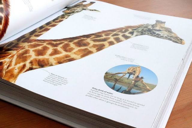 zoology dk book