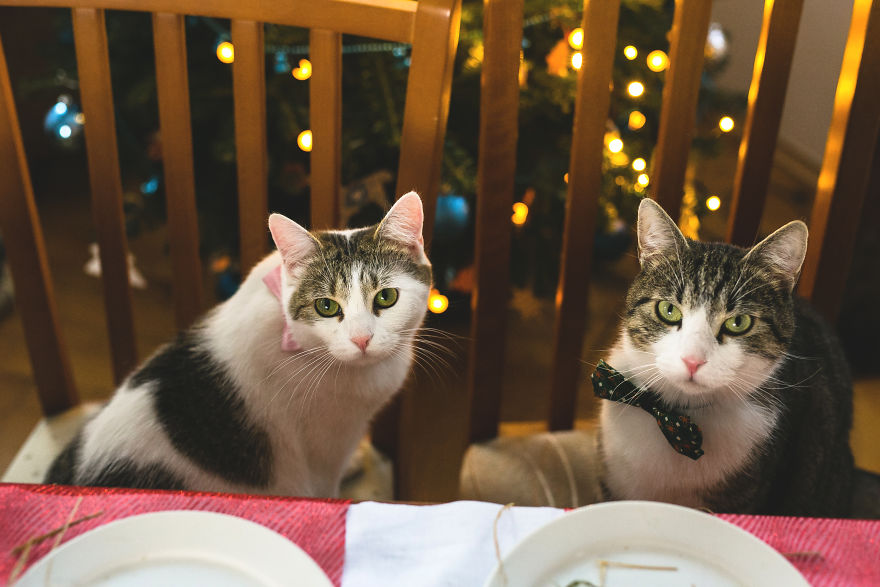 Cats' Version Of Christmas Eve