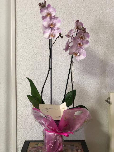 Bohemia-orchids-aalborg