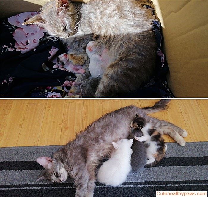 Took A Stray Mother Cat And Her Kittens Home. A Month After, She Has No More Mange Problem And I Have 3 Fat Kittens Too