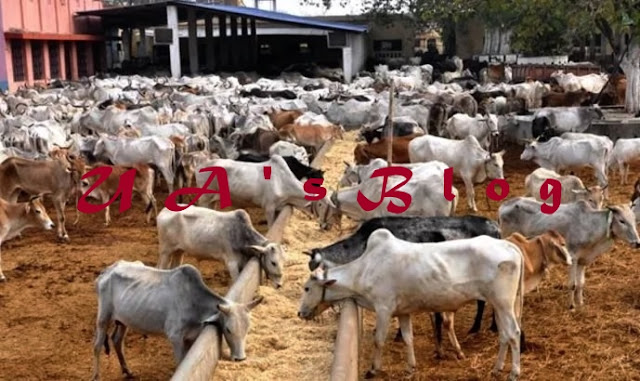 JUST IN:Reps probe N100bn released Under the Watch of Ex president Goodluck Jonathan by CBN for cattle ranches