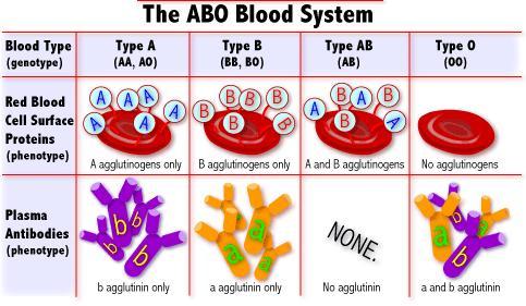 Penggolongan Darah Manusia Sistem A, B, O