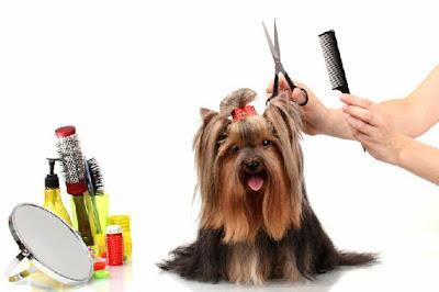 grooming untuk anjing