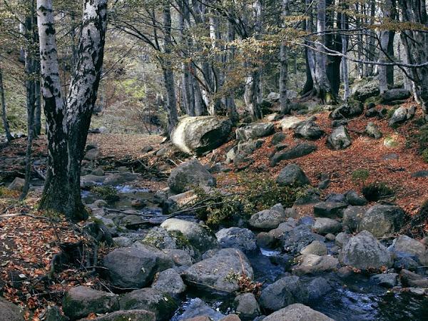 TAG: Есенни листа