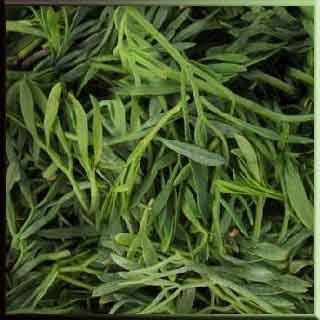kaya koruğu turşusu  kaya koruğu otu kaya koruğu bitkisi sebze Akdeniz Antalya Kaya