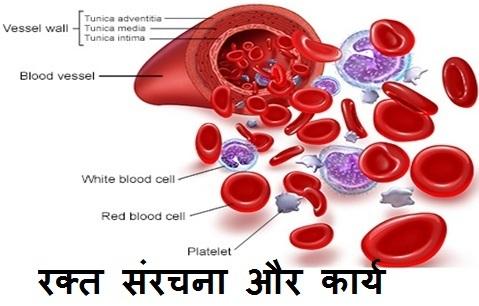 रक्त : संरचना और कार्य
