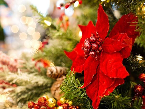 Last Minute Holiday Decor Tips