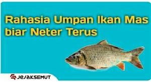 7 Umpan Ikan Mas Neter Terus [Dijamin Kewalahan]