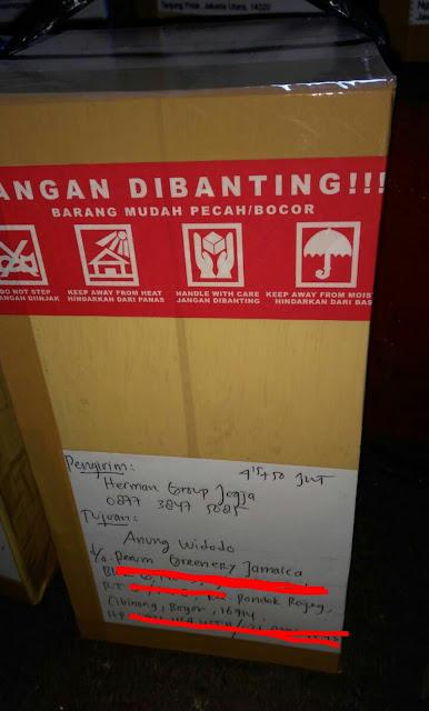 Pohon bidara di Bogor, kami kirim dari Jogja