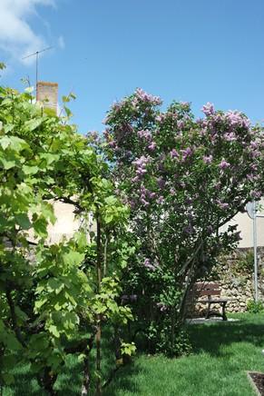 montmorillon vienne cité livre écrit jardin écrivains